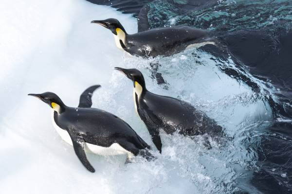 marcia dei pinguini2
