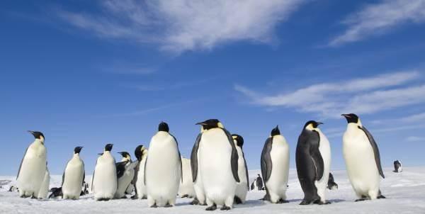 marcia_dei_pinguini