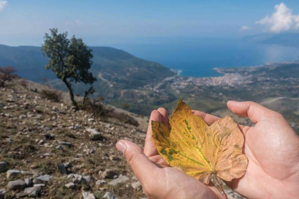 monte olivella