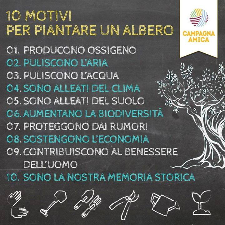 10 motivi albero