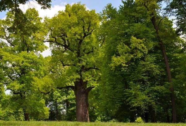 albero europeo premio