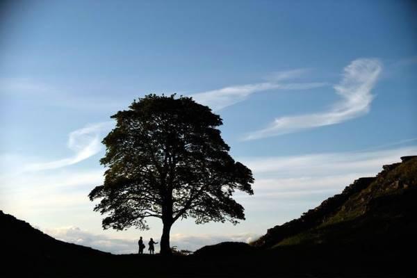 albero europeo premio5