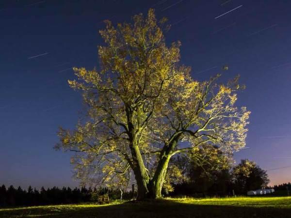 albero europeo premio6