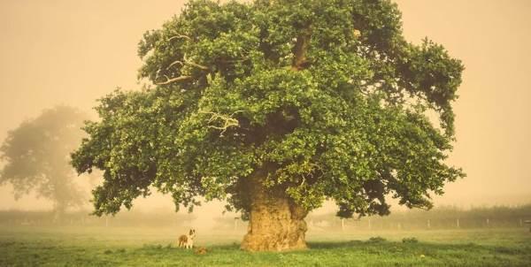 albero_europeo_premio