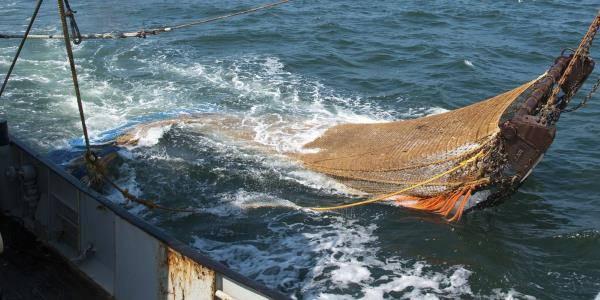 aree marine pesca