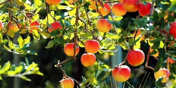città frutta argentina
