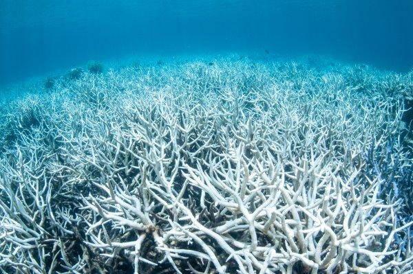 """barriera_corallina_greenpeace_1 BARRIERA CORALLINA: la lenta morte del """"capolavoro del mare"""""""