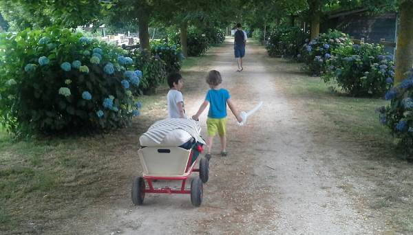 carello picnic bambini