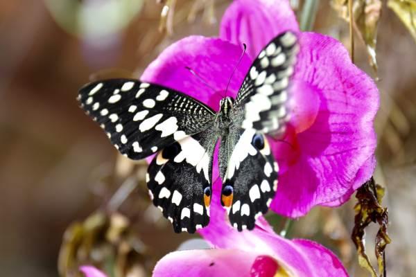casa delle farfalle1