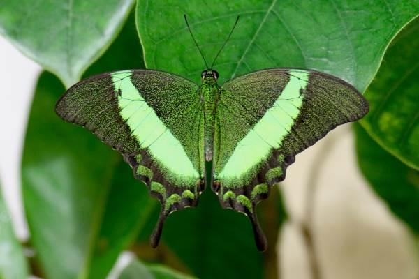 casa delle farfalle2
