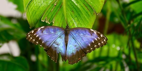 casa_delle_farfalle