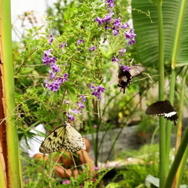 casa delle farfalle7