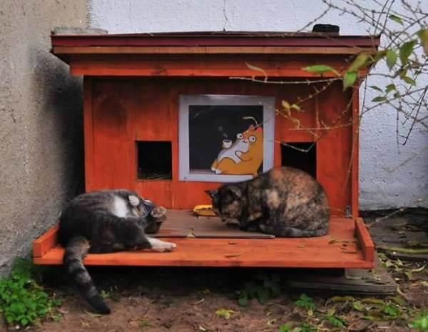 cucce gatti randagi