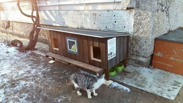 cucce gatti randagi1