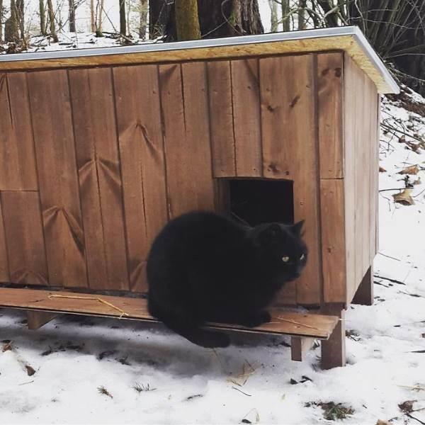 cucce gatti randagi2