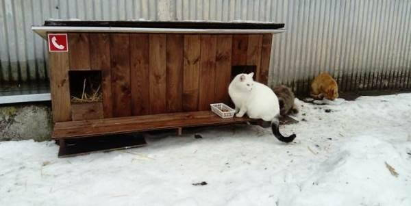 cucce_gatti_randagi