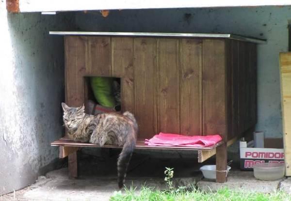 cucce gatti randagi4