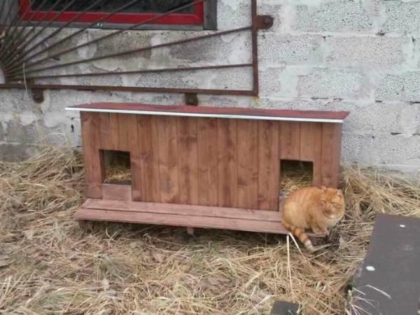 cucce gatti randagi6