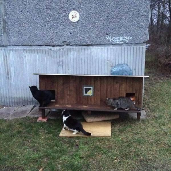 cucce gatti randagi8