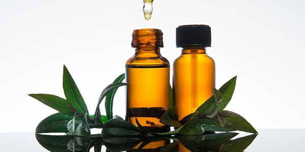 mirto olio essenziale