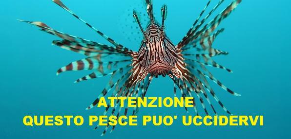 Pesce scorpione Italia