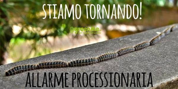 processionaria_cover