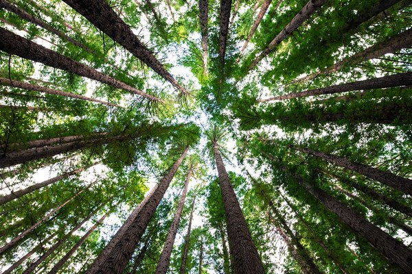 ragazzo alberi 2