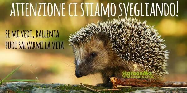 riccio_cover