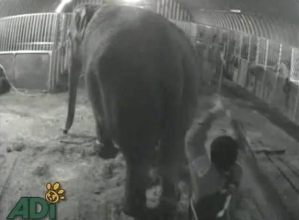 animali maltrattati circo
