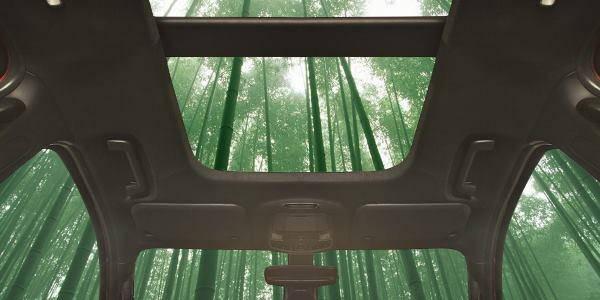 auto bambù