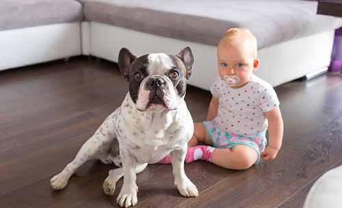 bulldogfrancese bambini
