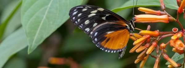 casa farfalle bordano1