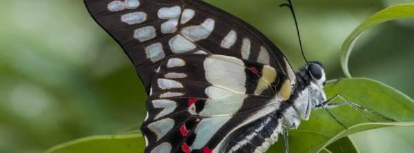 casa farfalle bordano2