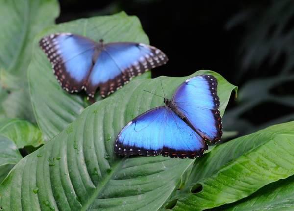 casa farfalle bordano3
