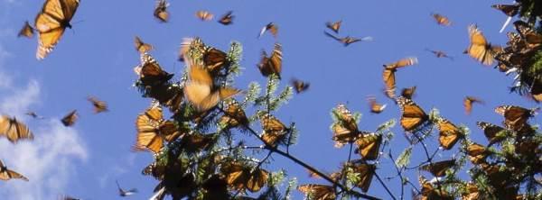 casa farfalle bordano4