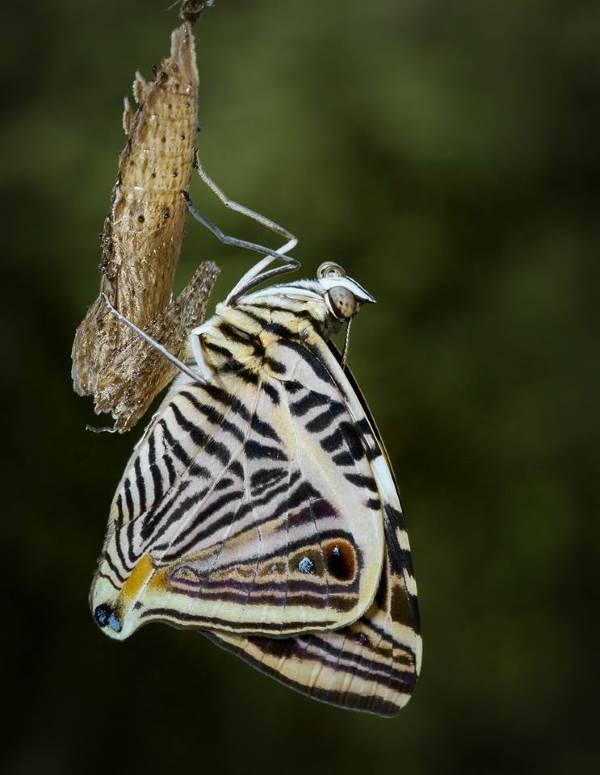 casa farfalle bordano5