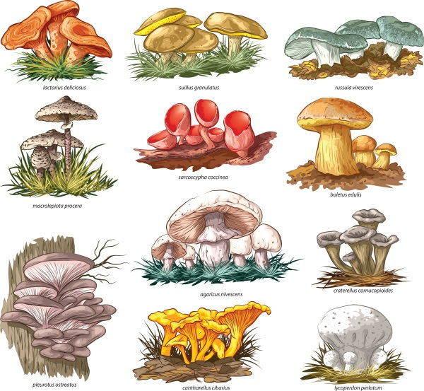 Calendario Funghi.Funghi Tutto L Anno La Stagionalita Mese Per Mese Greenme It