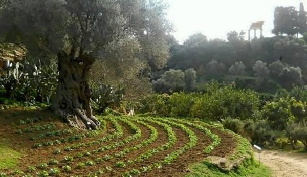 giardino kolymbethra3