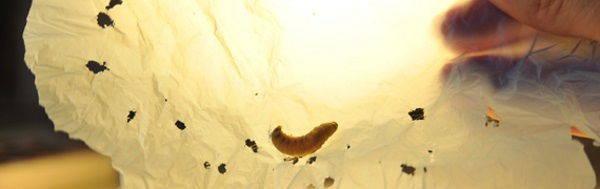 larva plastica cover