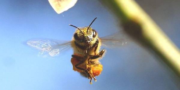 ape fiori