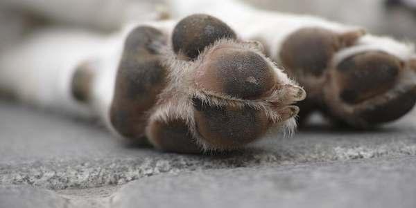 asfalto bollente cani cover