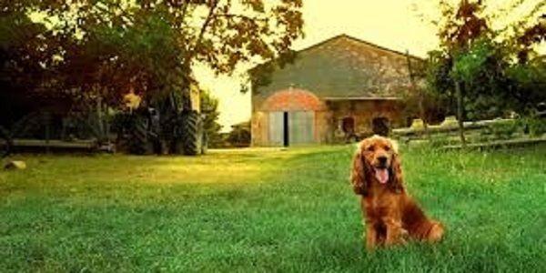 Gita fuori porta col proprio cane