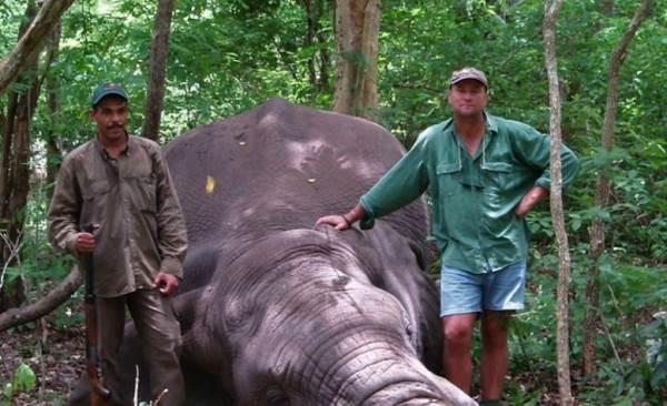 botha ucciso da elefante3