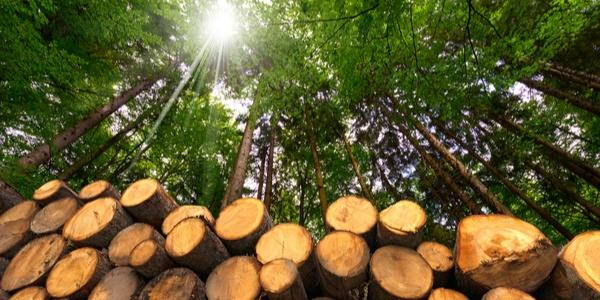 industria del legno e della carta