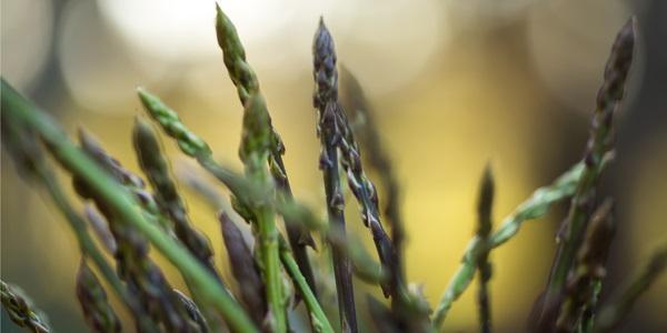 cover asparagi