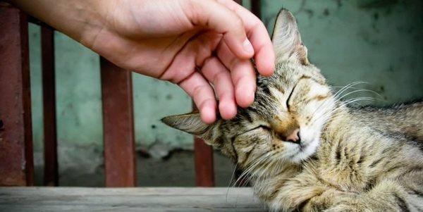 coccolatore di gatti