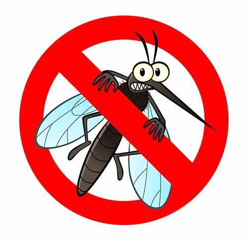 ledum zanzara infografica