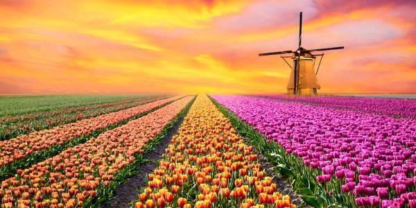 leggenda_dei_tulipani