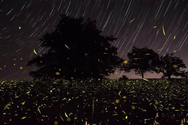 lucciole valle del sele4