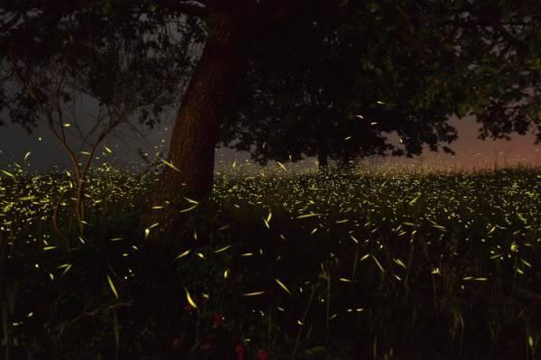 lucciole valle del sele5